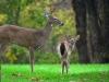 bigstockphoto_deer_s_family_210730