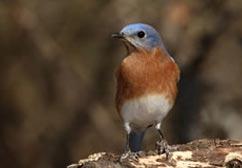bird-cs