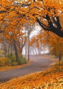 gorgeous-fall-color-tour